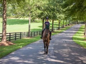 Milton horse